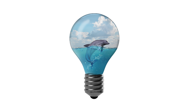 Dolphin Water Environment Sea  - Alexandra_Koch / Pixabay