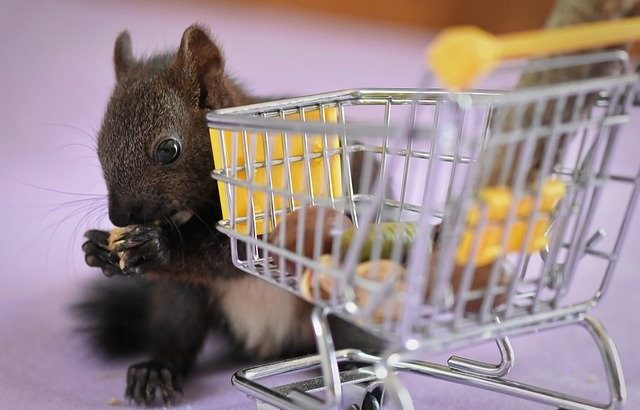 Squirrel Nager Shopping Cart Funny  - Alexas_Fotos / Pixabay